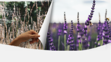 Natixis mobilizes its business lines in support of biodiversity